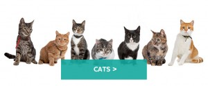 Cats-large