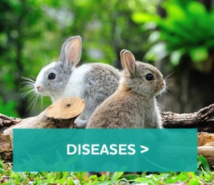 Rabbit-diseases