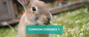 Rabbit-diseases-block