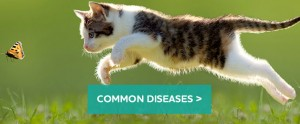 cats-diseases