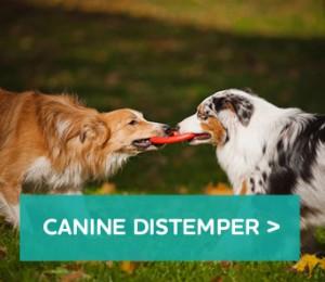 Canine-distemper