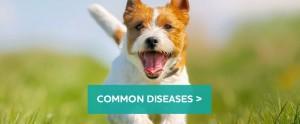 Dog-diseases