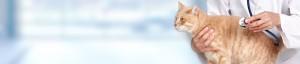 Feline-leukaemia