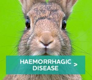 Haemorrhagic-Disease