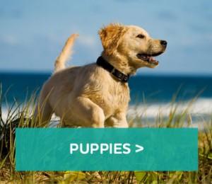 Puppies-block