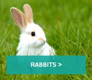 Rabbits-block