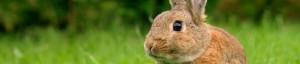 Rabbits-header