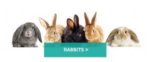 Rabbits-large