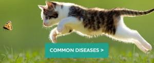 cats-diseases