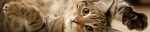 feline-chly
