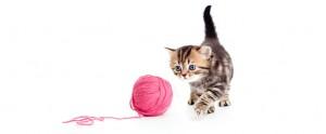 kitten-03