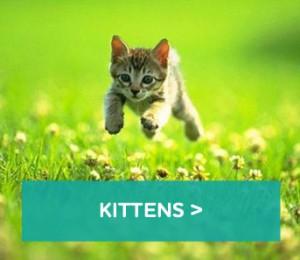 kittens-block