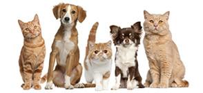 pet-advice-sidebar