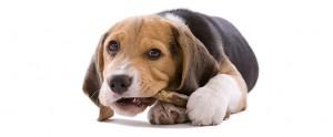 puppy-care-02