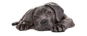 puppy-care-04